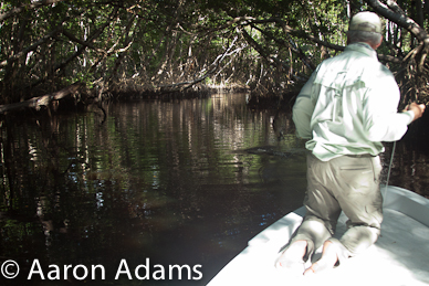 angler with jumping tarpon in creek