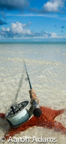 scenic photo, fly rod and starfish